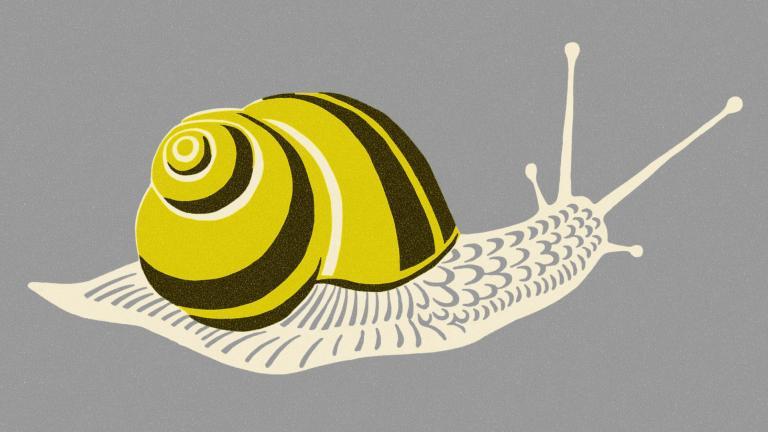 CX programme snail