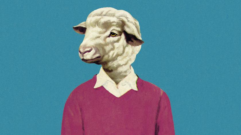 Sheep purpose